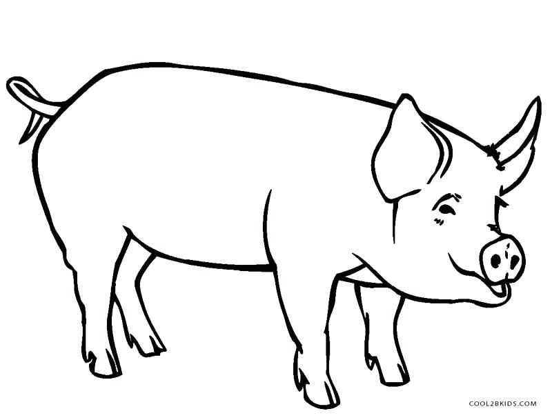 800x609 Pig Coloring Pages For Kids Remarkable Design Pig Coloring Pages