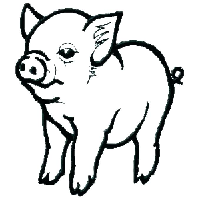 680x680 Pig Coloring Pages Coloring Pages Pig Pig Coloring Pages Pig