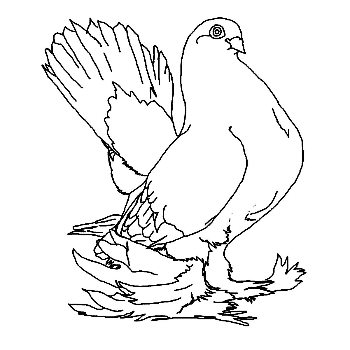 1200x1200 Free Printable Pigeon Coloring Pages For Kids