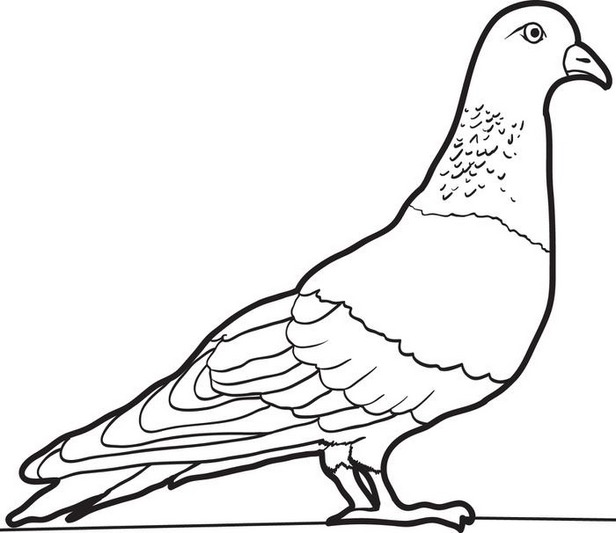 616x533 Pigeon Coloring Page Coloring Book