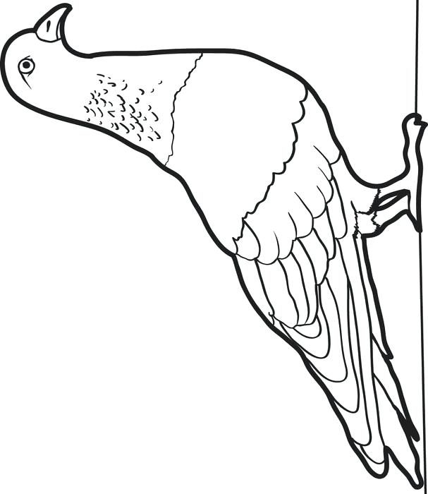 607x700 Pigeon Coloring Pages Messenger Pigeon Pigeon Presents Coloring