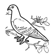 230x230 Tippler Pigeon At Pigeon Coloring Page