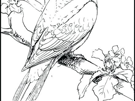 440x330 Pigeon And Duckling Coloring Pages