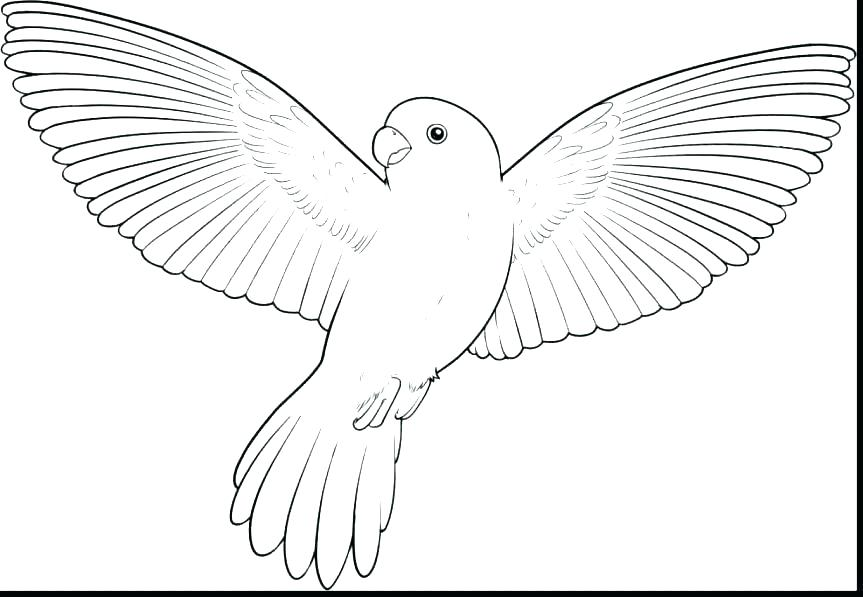 863x597 Coloring Page Bird Cool Design Ideas Pigeon Coloring Pages Flying