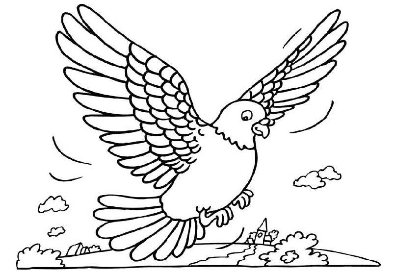 805x559 Coloring Page Pigeon