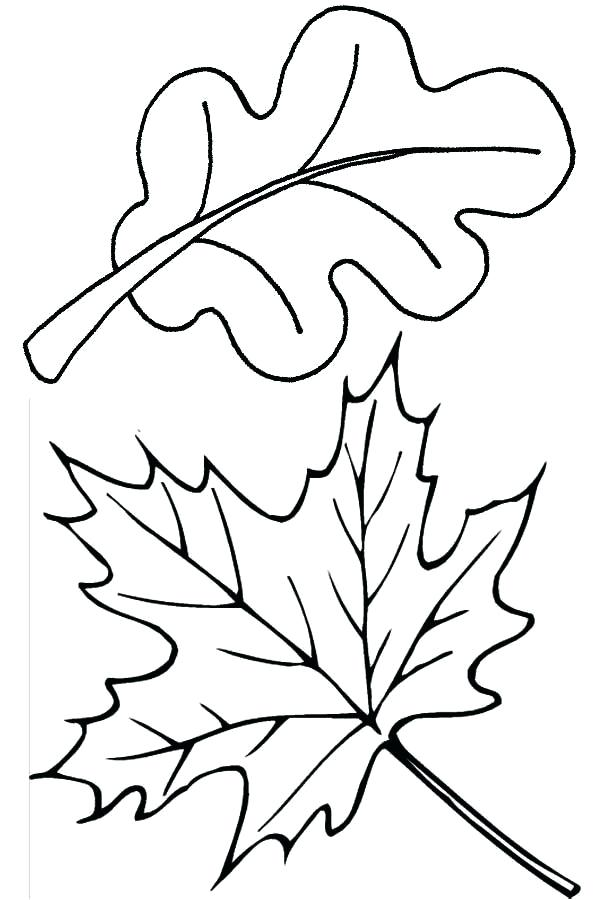 600x900 Fall Leaves Coloring Pages
