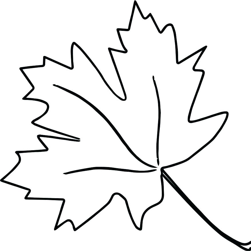 878x879 Leaf Coloring Page Leaf Color Pages Thanksgiving Leaves Coloring