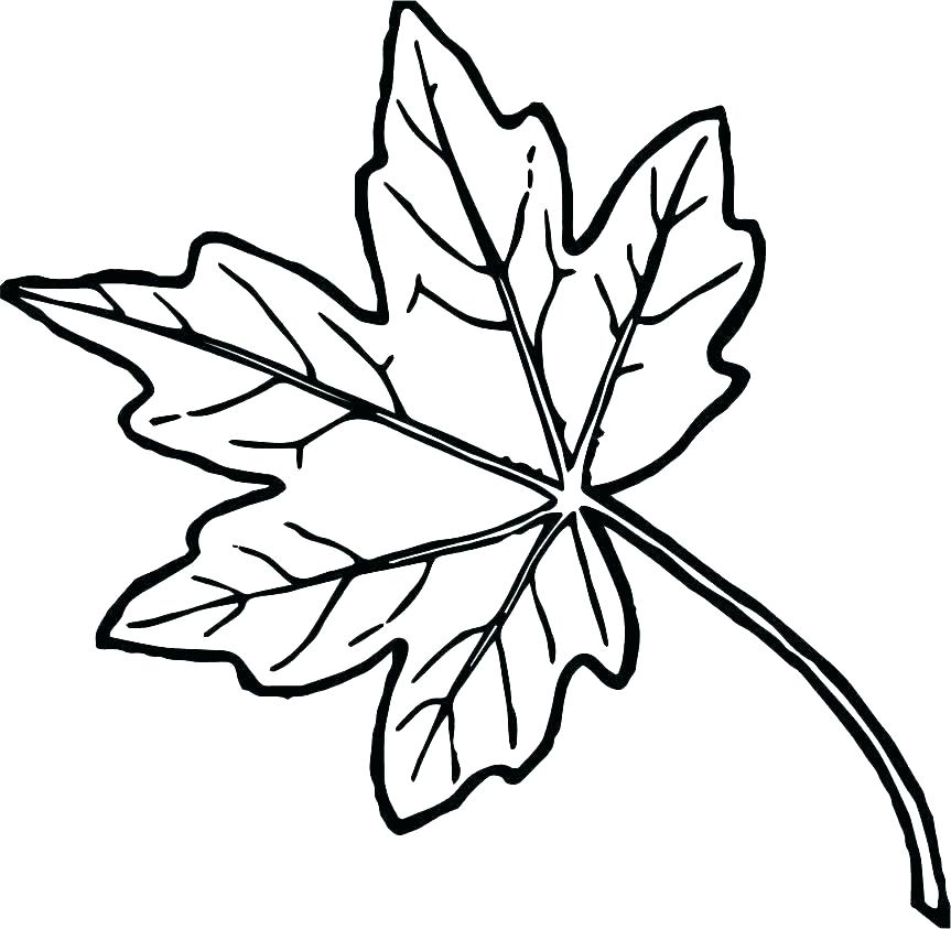 863x843 Leaves Coloring Pages Pile Of Leaves Coloring Pages Autumn Maple