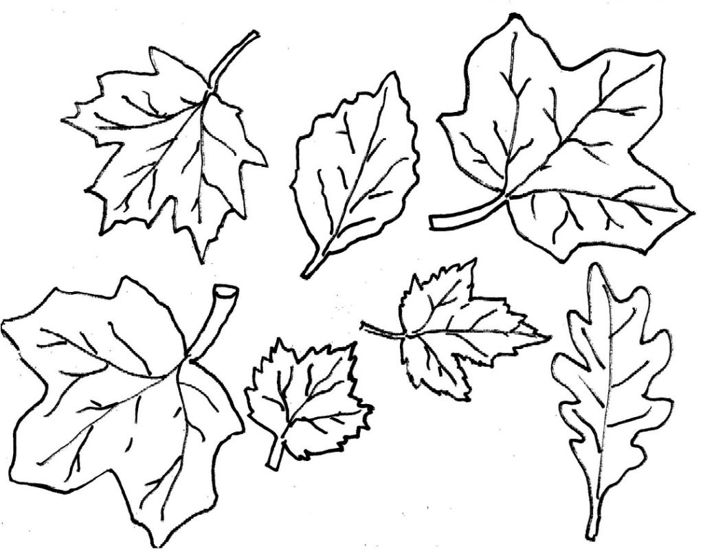 1026x815 Awesome Fall Leaves Coloring Pages About Remodel Picture