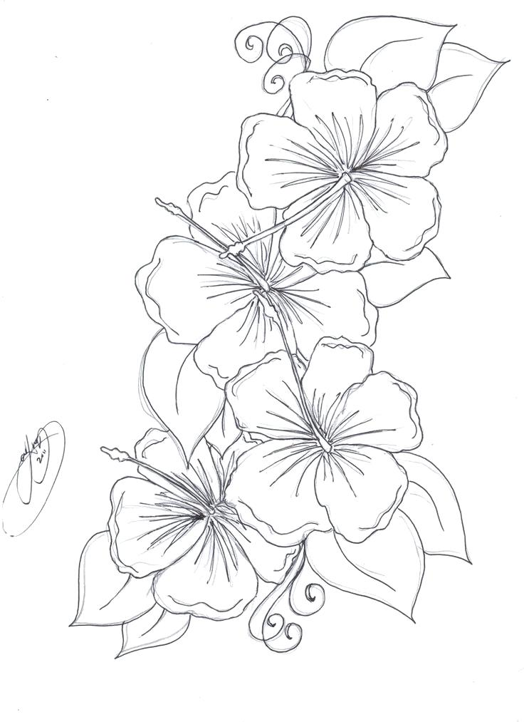 736x1013 Hibiscus Flower Coloring Pages Pin Drawn Beautiful Intended