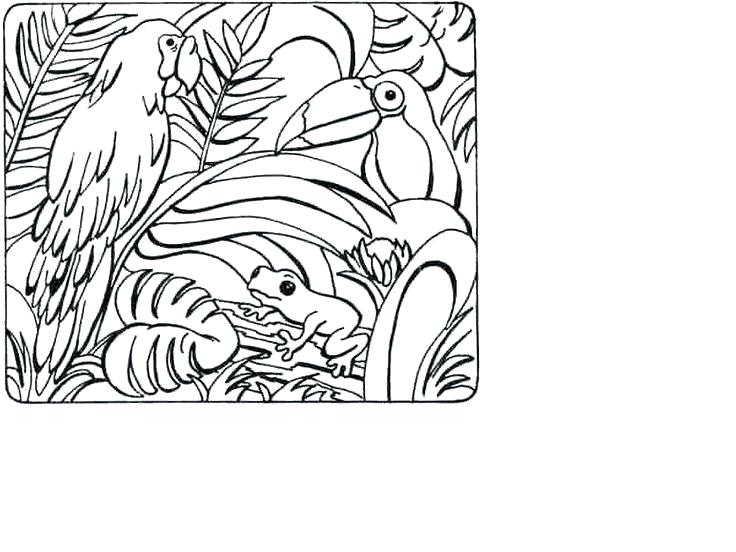 736x552 Tropical Rainforest Coloring Page Animals Pages Pin Drawn Awesome