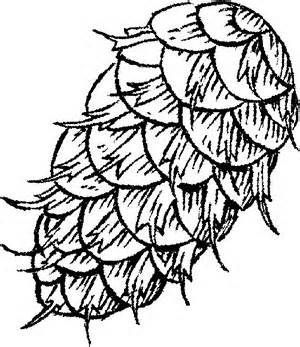 300x347 Pine Cones Colouring Pages Pine Cones Pine Cone