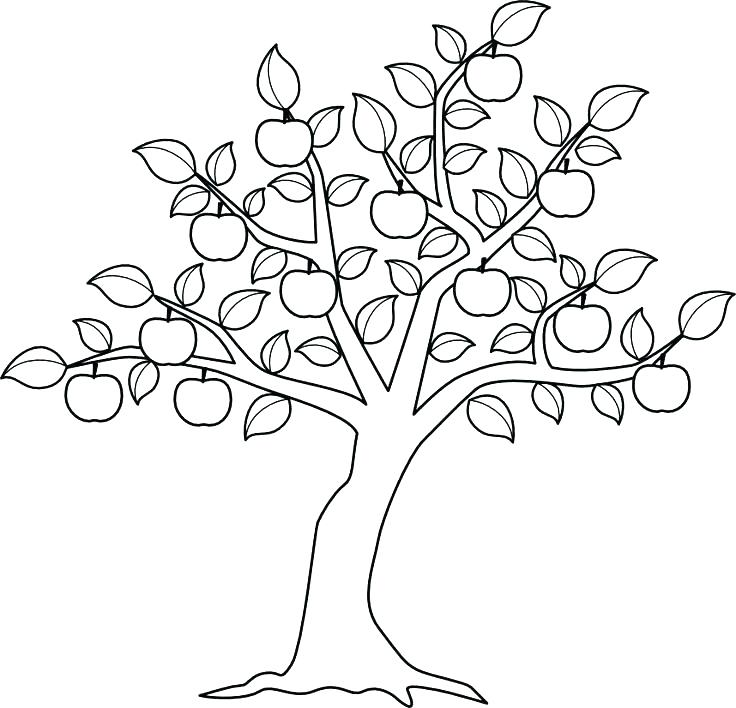 736x708 Tree Coloring Pages Tree Coloring Page Coloring Pages Tree Apple