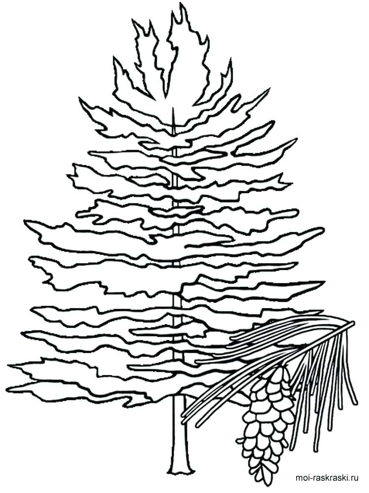 750x1000 White Pine Tree Coloring Page