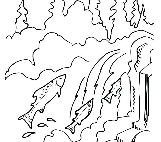 678x600 Pink Coloring Page Salmon Coloring Page Salmon Coloring Pages