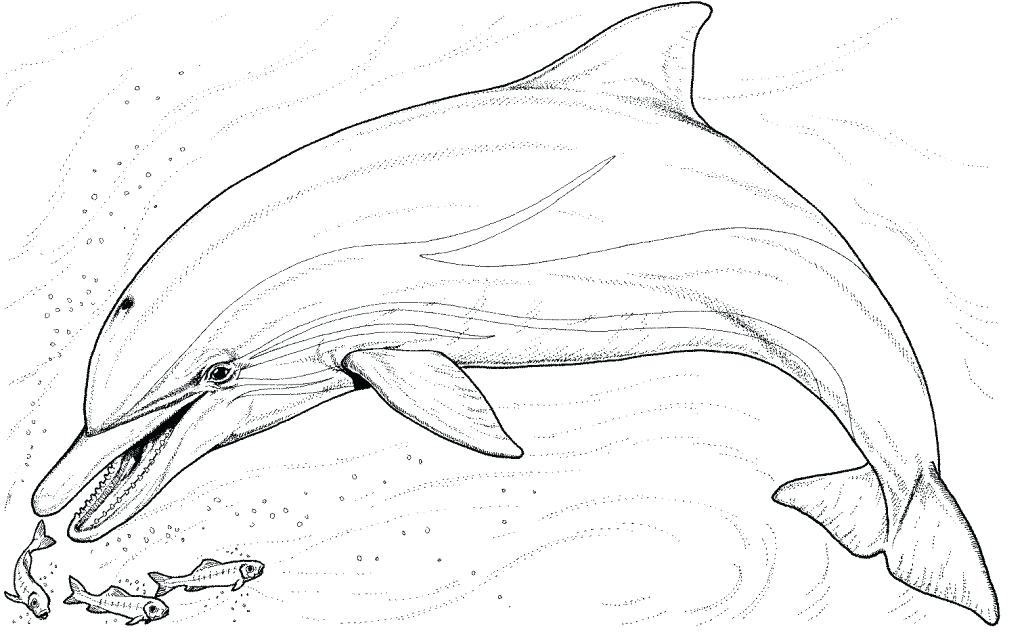 1024x635 Letter D Is For Dolphin Coloring Page Free Printable Pages Kids