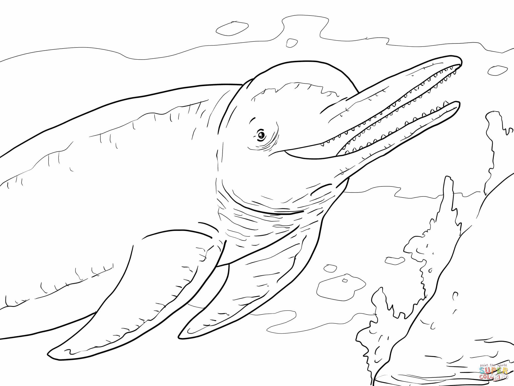 2048x1536 Pink Dolphin Coloring Pages