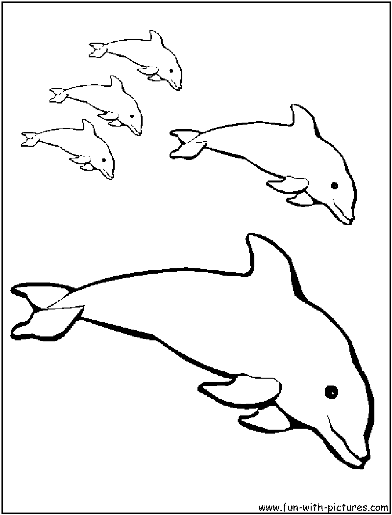 800x1050 Baby Dolphin Coloring Pages