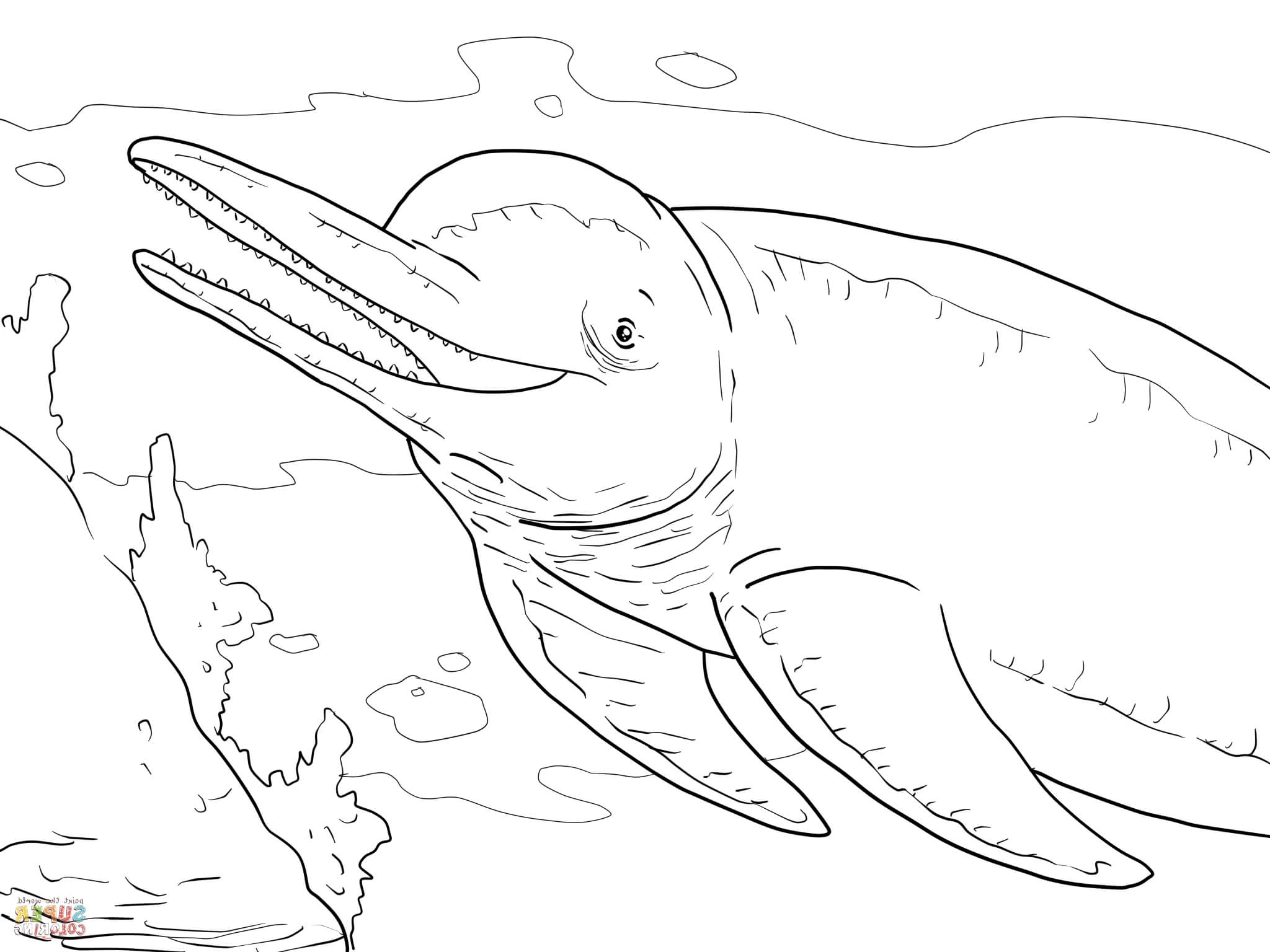 2048x1536 River Dolphin Coloring Pages Dolphins Coloring Pages Free