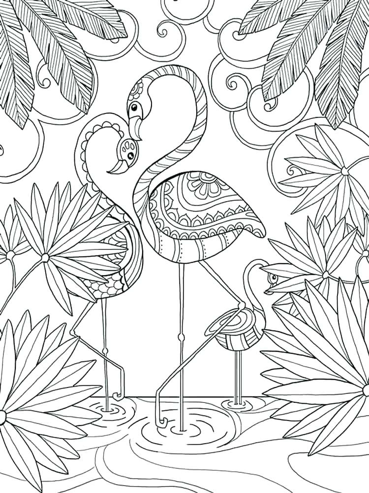 750x1000 Flamingo Coloring Page Flamingo Coloring Page Flamingo Coloring