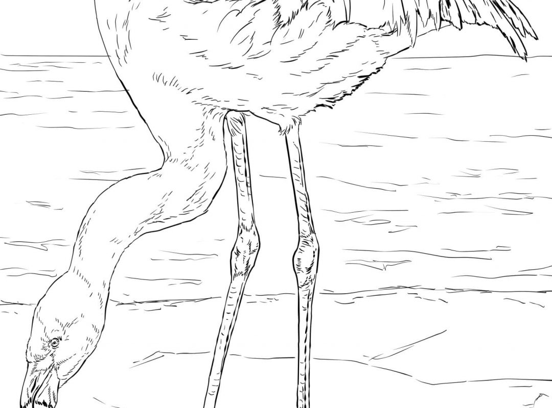 1080x800 Flamingo Coloring Pages Cute Page For Adults To Print At Home Bird