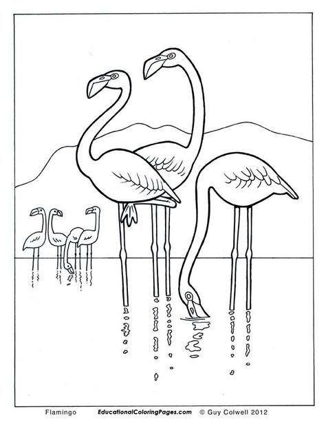474x613 Flamingo Coloring Pages, Flamingo Colouring Pages Elephants