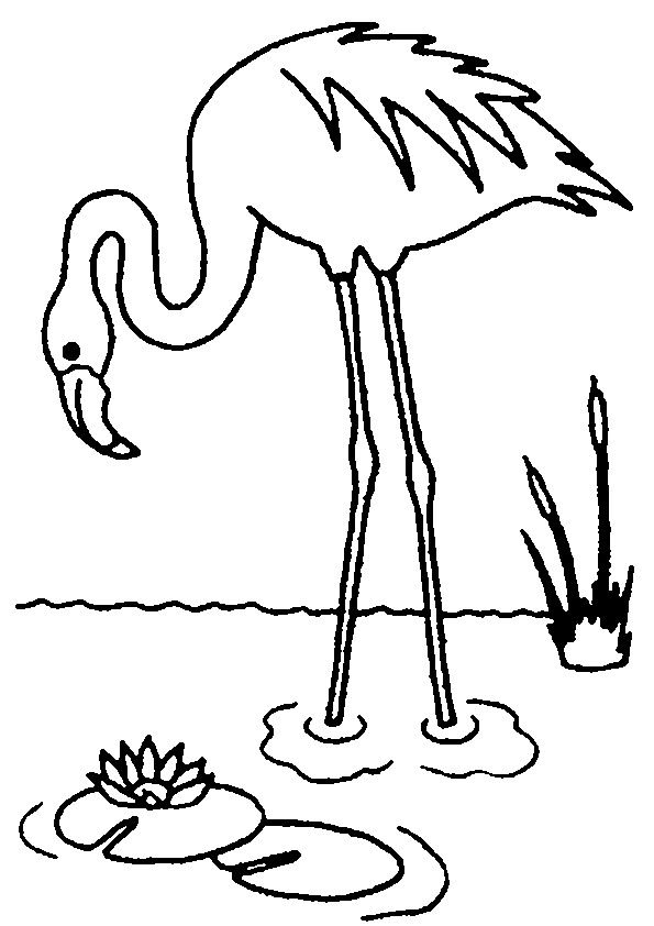 595x842 Flamingo Coloring Pages Dibujos Animales