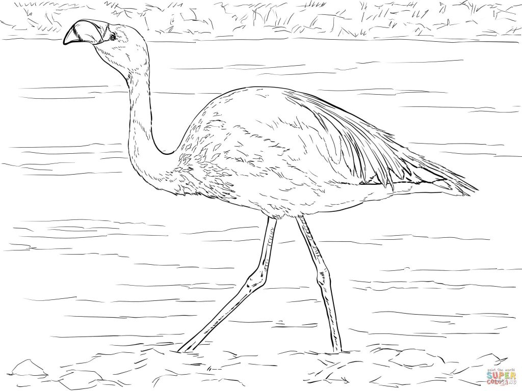 1024x768 Marvelous Decoration Flamingo Coloring Page Flamingos Coloring