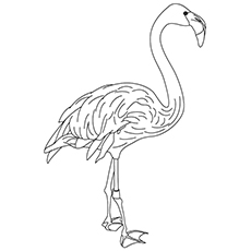 230x230 Top Flamingo Coloring Pages For Toddlers