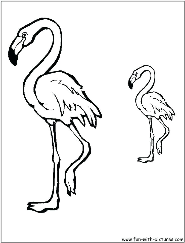 736x966 Flamingo Pictures To Color