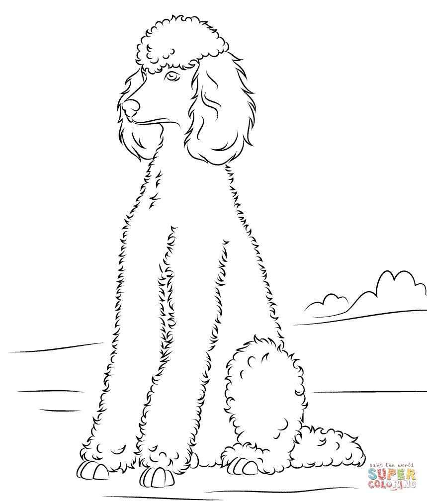 859x1008 Poodle Super Coloring Dog Patterns Poodle And Dog