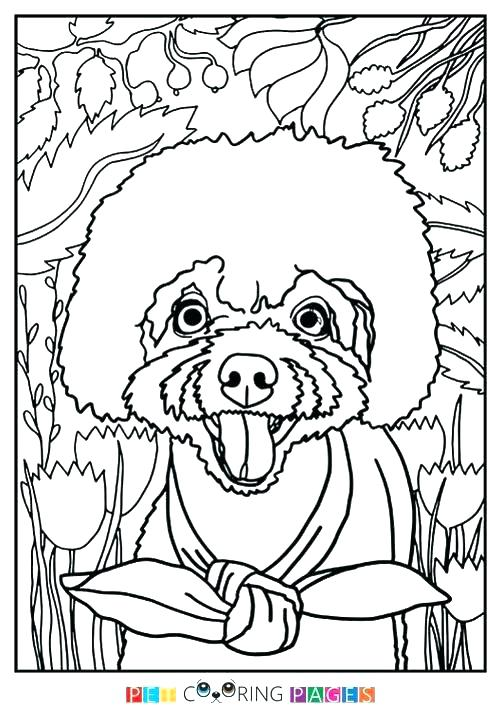 500x711 Poodle Coloring Page Poodle Coloring Pages To Print Poodle