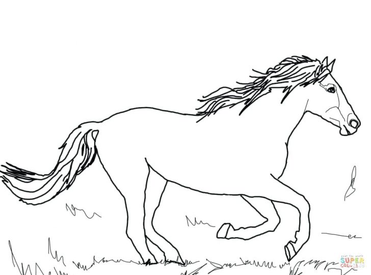 728x540 Funny Horse In Horses Coloring Page Wild Pages To Print Mustang