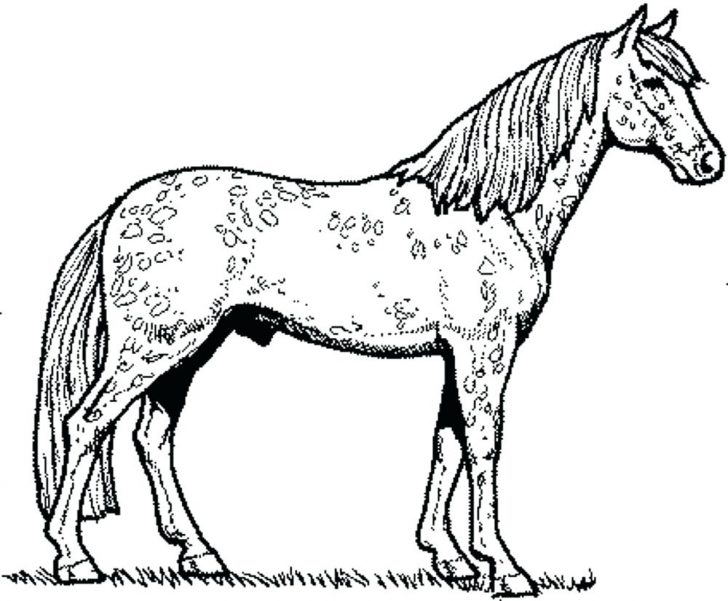 728x601 Mustang Horse Coloring Pages Pictures Funny In Horses Page How