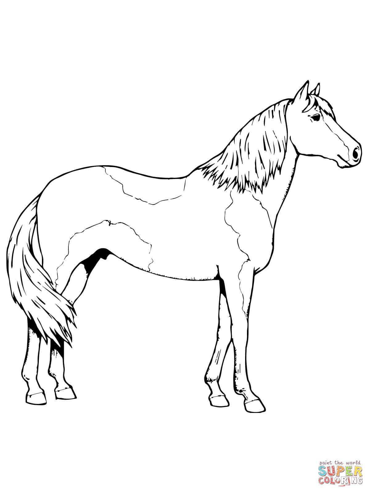 1200x1600 Paint Horse Coloring Pages