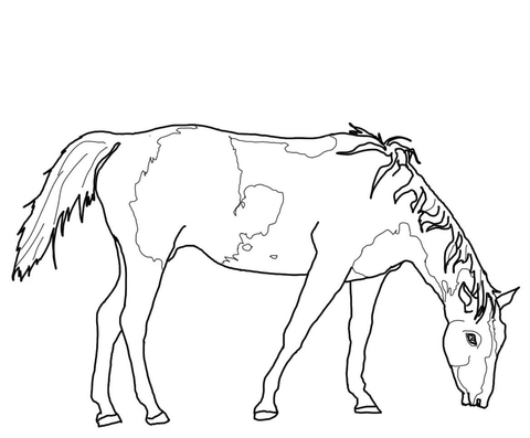 480x397 Paint Horse Coloring Pages