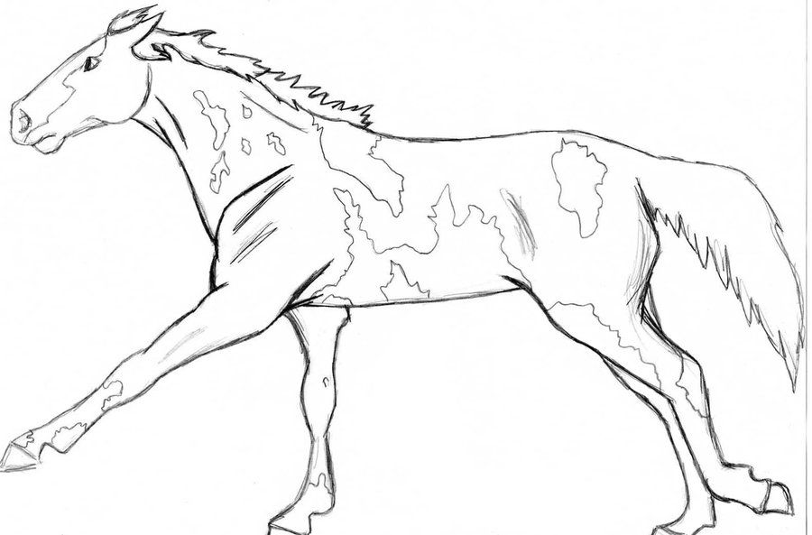 900x593 Realistic Wolf Coloring Pages Paint Or Pinto Horse