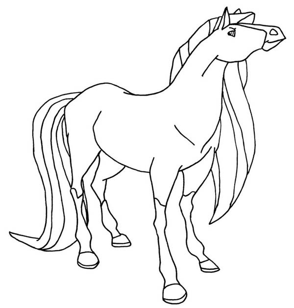 600x629 The Fastest Horse