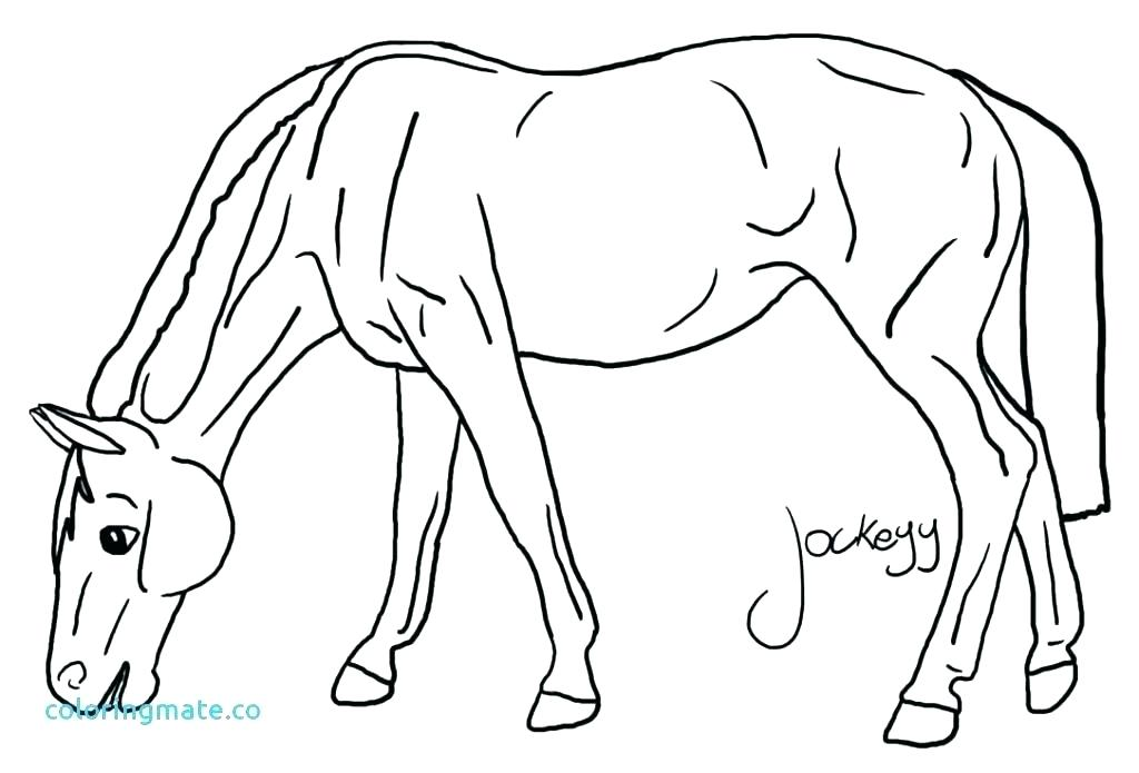 1024x695 Breyer Horse Coloring Pictures Horse Color Page Horse Color Page