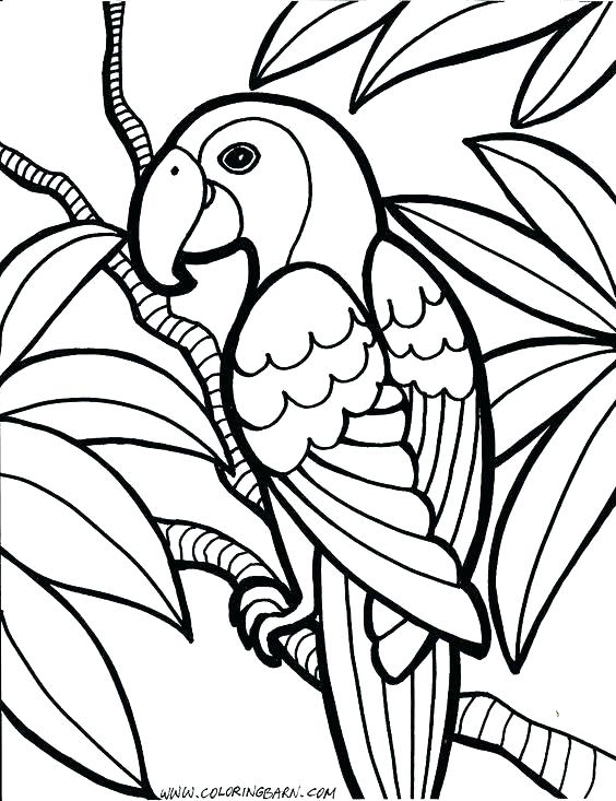 564x733 Parrot Coloring Pages Drawn Parrot Coloring Book Pittsburgh Pirate