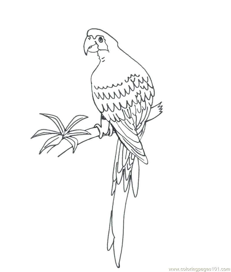 800x942 Parrot Coloring Pages New Macaw Bird Coloring Pages Of Parrot