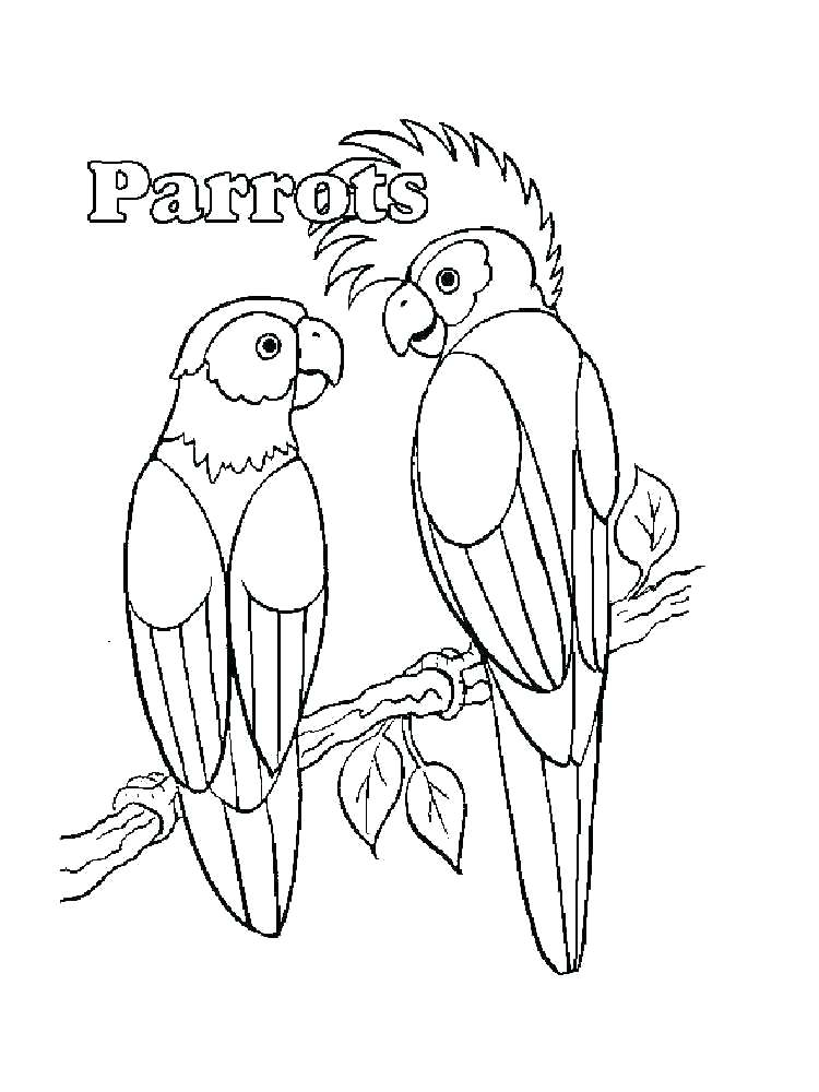 750x1000 Parrots Coloring Pages Coloring Pages Of Parrots Coloring Pages