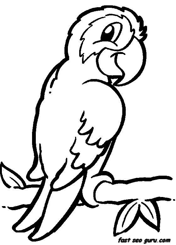 560x781 Pirate Themed Coloring Pages Jungle Bird Parrot Coloring Pages