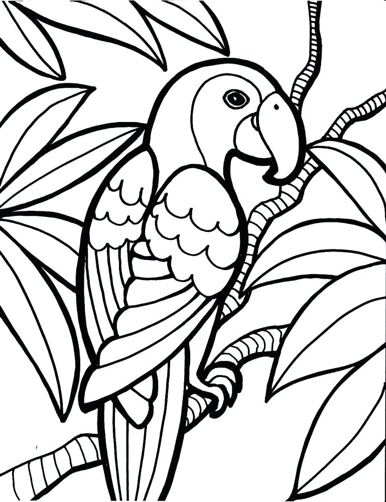 769x1000 Pittsburgh Pirate Parrot Coloring Pages Awesome Drawing