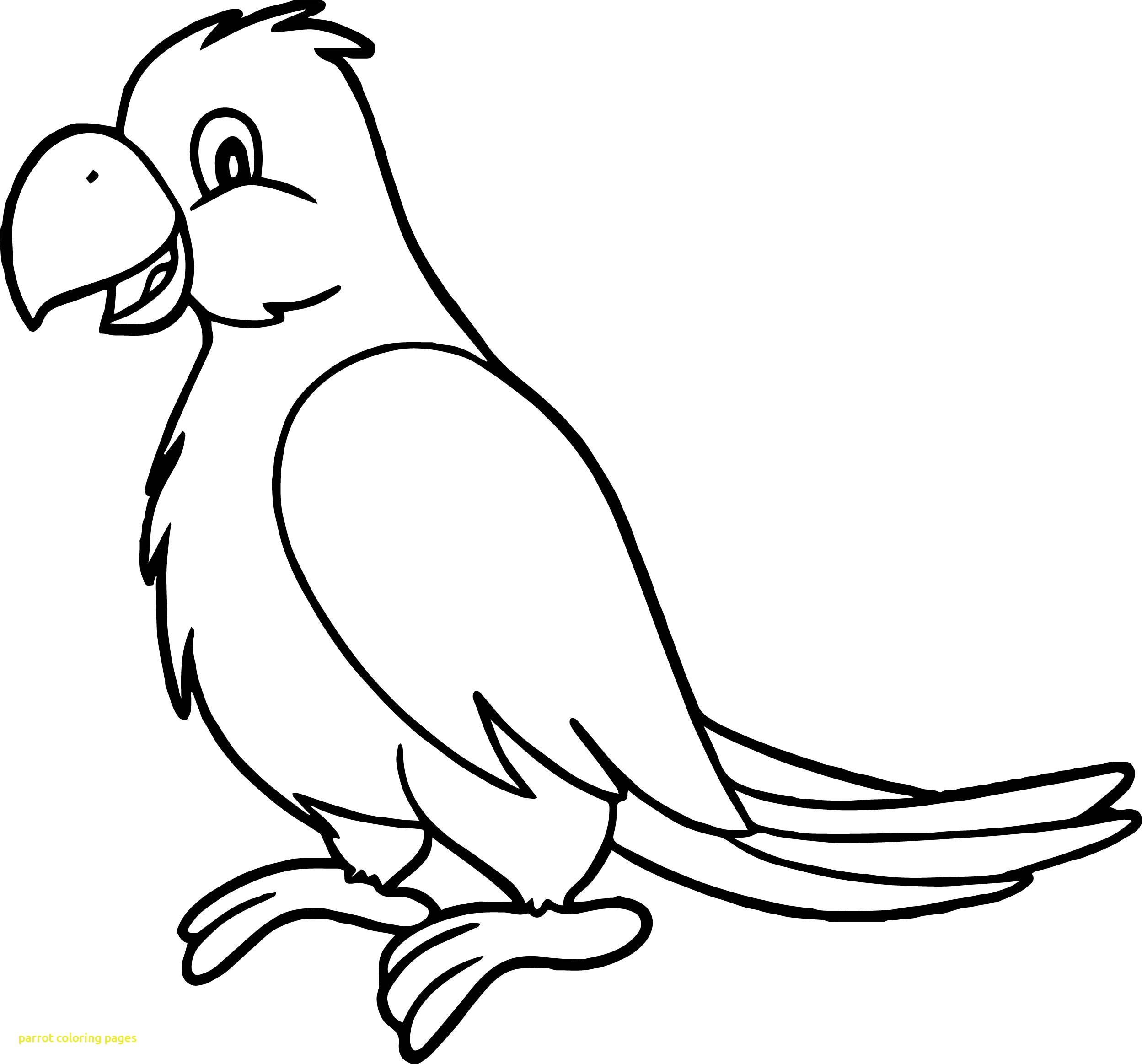 2497x2326 Pirate Parrot Coloring Pages Archives