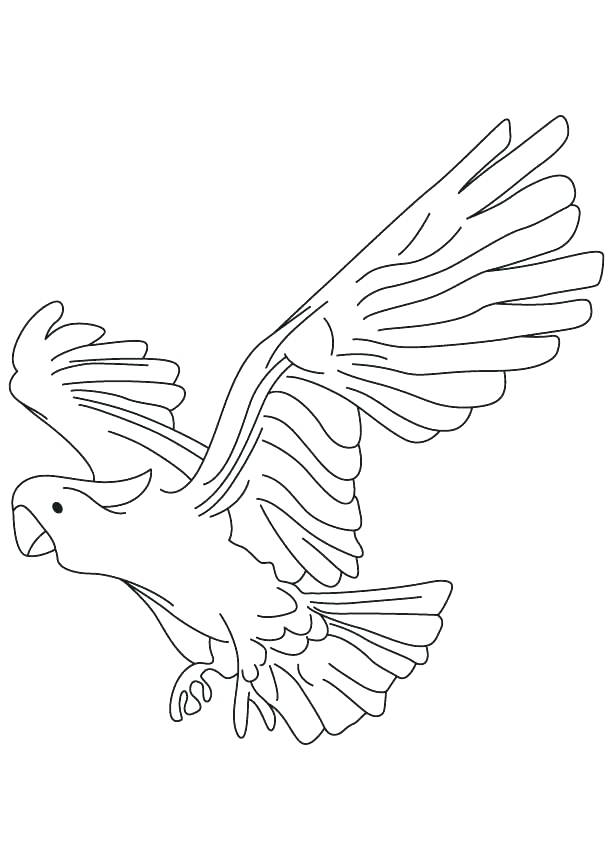 613x860 Parrot Coloring Pages Cockatoo Parrot Coloring Pages Pittsburgh