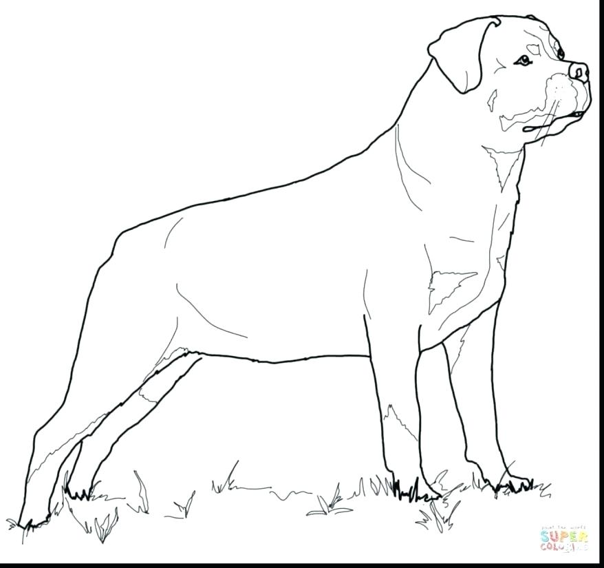 Pit Coloring Pages