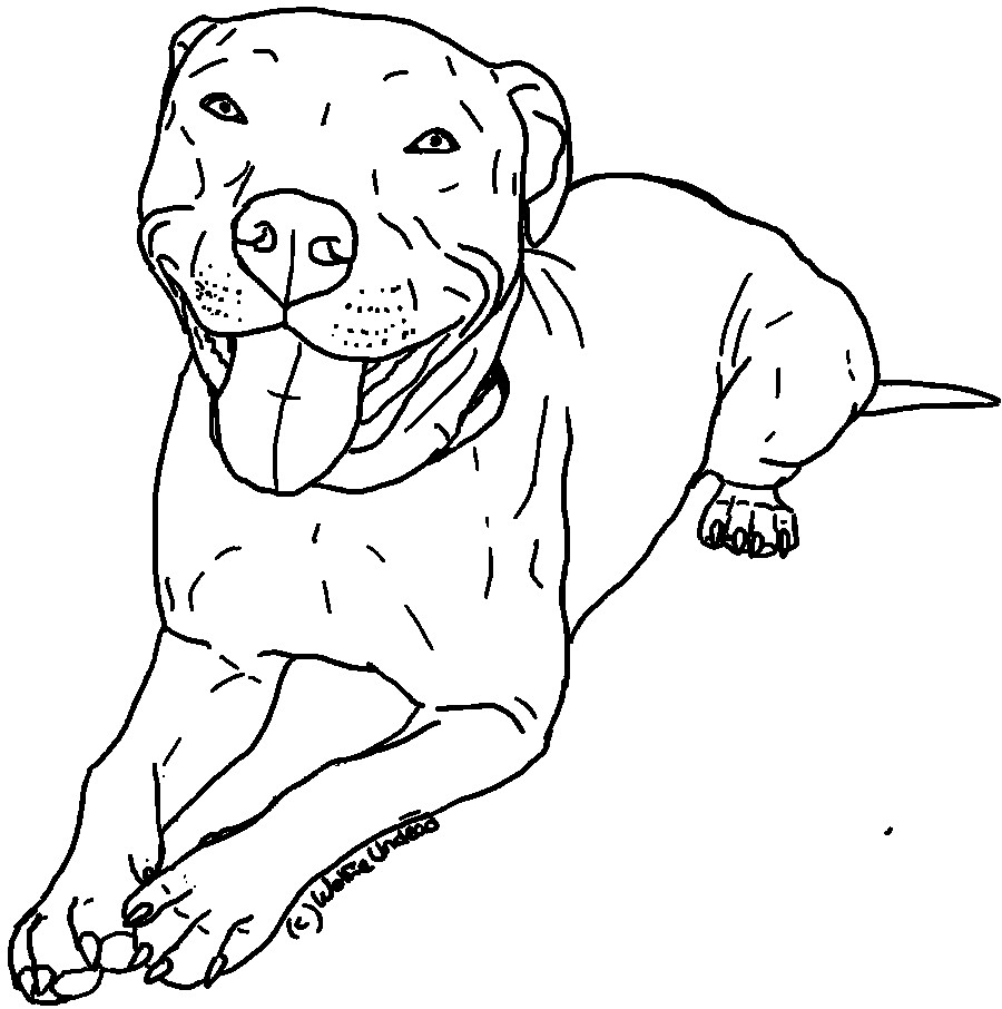 Pitbull Puppies Drawing At Getdrawings Com Free For Personal Use