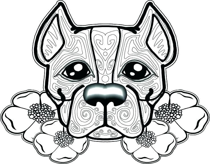 736x575 Pit Bull Coloring Pages