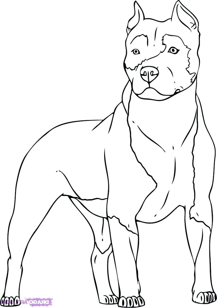 The Best Free Pitbull Coloring Page Images Download From 50 Free